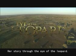 National Geographic Eye Of The Leopard,国家地理:花豹之眼(720P)