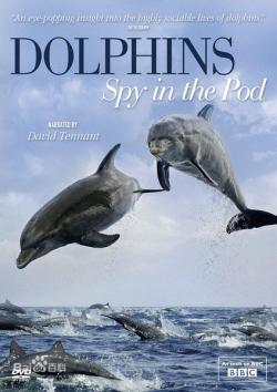 BBC.Dolphins.Spy.in.the.Pod,BBC 卧底海豚帮[全二集](720P)