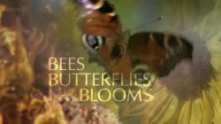 BBC Bees Butterflies and Blooms,BBC:蜜蜂 蝴蝶和鲜花[全三集](720P)