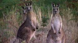 Aussie Animal Island,BBC 澳洲动物乐岛[全6集](720P)