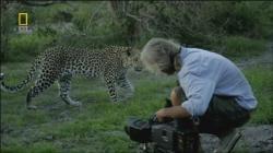 National Geographic Living With Big Cats,国家地理:与大猫一同生活(720P)