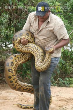 National Geographic Nature Untamed Anaconda Queen of the Serpents,国家地理 - 巨蛇女王