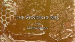 BBC The Wonder of Bees with Martha Kearney,BBC:蜜蜂奇观[全4集](720P)