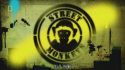 National Geographic Street Monkeys,国家地理:大街上的猴子[全3集](720P)