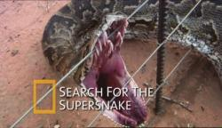 National Geographic Search For The Supersnake,国家地理:超级大蛇(720P)