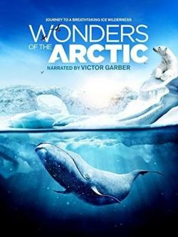 Wonders of the Arctic,[4K电影]北极奇观,奇幻冰极[全景声2160P](蓝光原版)