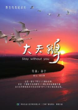 Swan Stay without you,大天鹅(1080i)